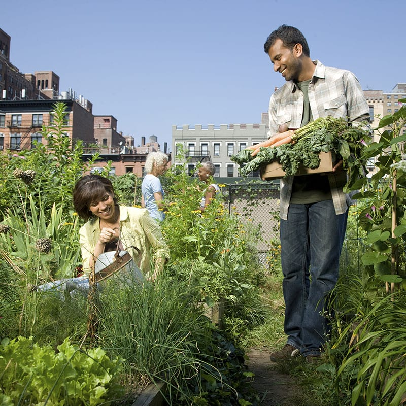 an image of a man and woman outside gardening